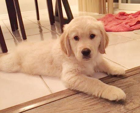 Odus Wordsworth as a puppy