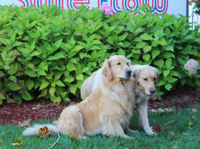the two dogs in front of the Sure Flow sign